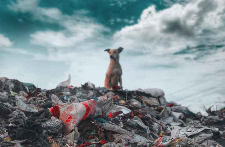photo of dog sitting on top of garbage
